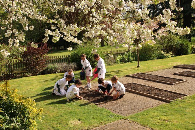 Surrey Garden Open Days
